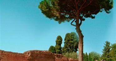 Pijnboom Pijnboompitten Italie Grand'Italia